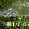 Goals for 2015 & Mini-Goals for January & February