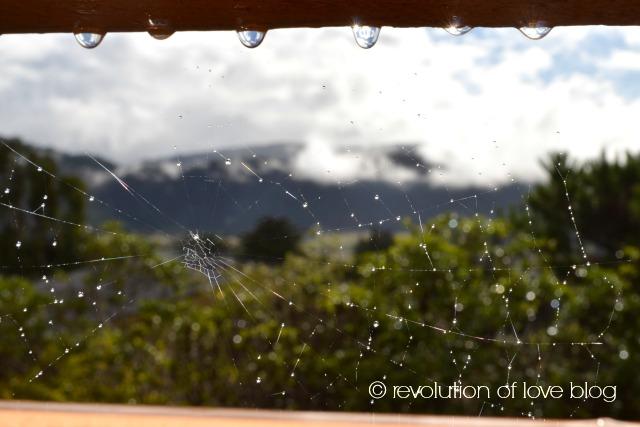 revolution of love blog  -cwa_deck_rain