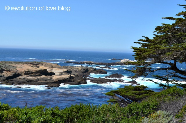 point_lobos_2